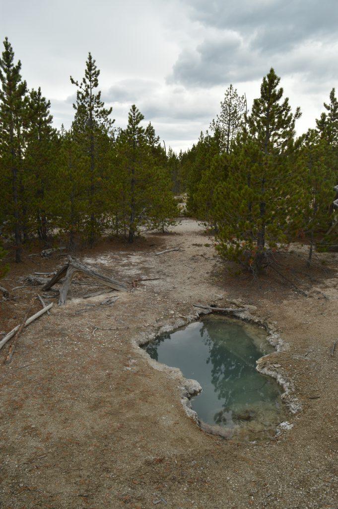 Yellowstone. Calafiana